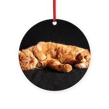Cat nap Round Ornament