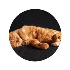 "Cat nap 3.5"" Button"