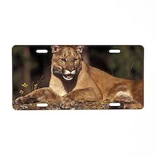 Cougar, Columbia Falls, Mon Aluminum License Plate