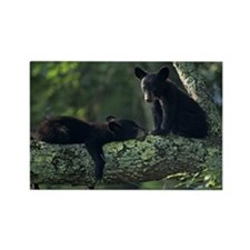 Black bear cubs in tree, Great Sm Rectangle Magnet