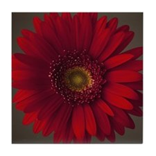 Red gerbera daisy Tile Coaster