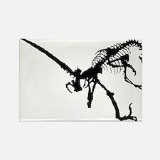 Velociraptor Skeleton Rectangle Magnet