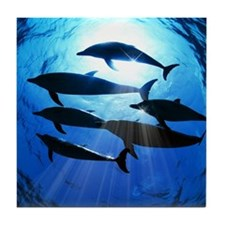 Porpoises in the Ocean with Sun Rays  Tile Coaster