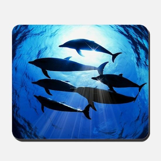 Porpoises in the Ocean with Sun Rays Str Mousepad