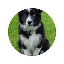 """Collie puppy dog 3.5"""" Button"""