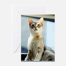 Singapura True Beauty Linus Greeting Card