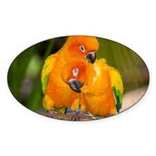 Sun Conures Decal