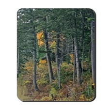 Autumn pines Mousepad