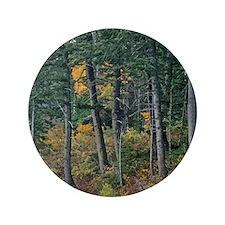 "Autumn pines 3.5"" Button"