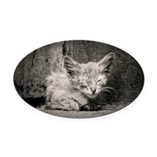 Kitten Oval Car Magnet