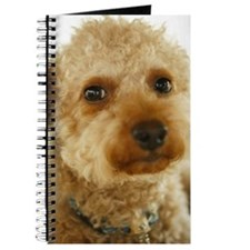 Close-up of a toy poodle Journal