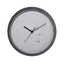 Bird tracks lead into the ocean from th Wall Clock