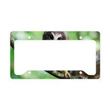 Northern Saw-whet owl License Plate Holder