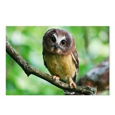 Northern Saw-whet owl Postcards (Package of 8)