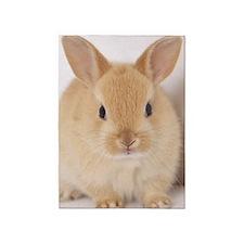 rabbit on white background 5'x7'Area Rug
