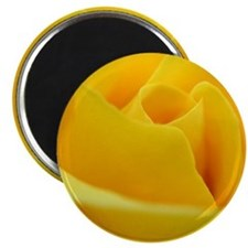 Perfect yellow rose Magnet