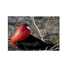 Frigate Bird Rectangle Magnet
