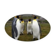 King Penguins Oval Car Magnet