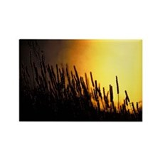 Wheaton Sunset Two-14x10 Rectangle Magnet