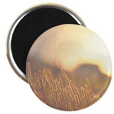 Wheaton Sunset SQwht Magnet
