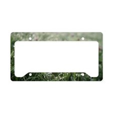 Purple clover meadow, early m License Plate Holder