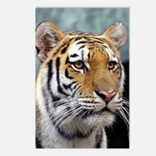 Majestic Tiger Postcards (Package of 8)