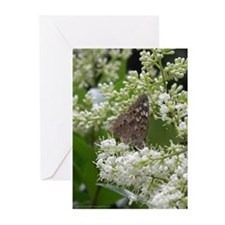 Butterfly - Hackberry Emperor Greeting Cards