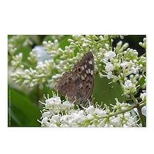 Butterfly - Hackberry Emperor Postcards