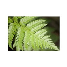 fern leave Rectangle Magnet