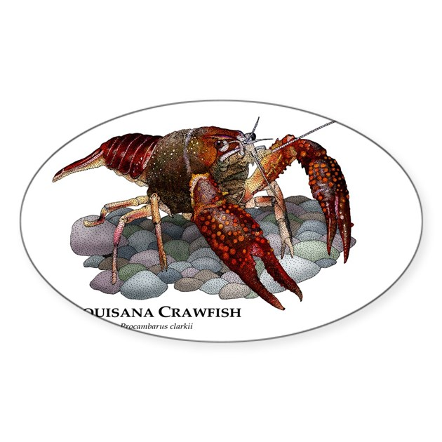 Louisiana Crawfish Sticker (Oval) By Wildlife_Art_Roger_Hall