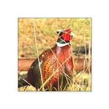 "Male Pheasant Square Sticker 3"" x 3"""