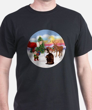 Treat for a Calico and white cat T-Shirt