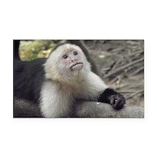 Capuchin Monkey Rectangle Car Magnet