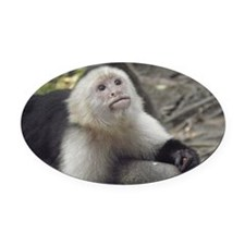 Capuchin Monkey Oval Car Magnet