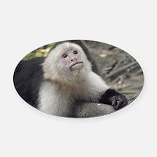 Capuchin Monkey Oval Car Magnet