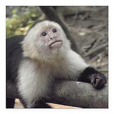 "Capuchin Monkey Square Car Magnet 3"" x 3"""