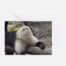 Capuchin Monkey Greeting Card