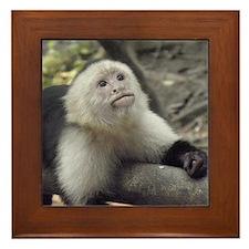 Capuchin Monkey Framed Tile