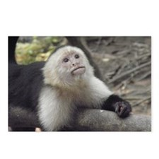 Capuchin Monkey Postcards (Package of 8)