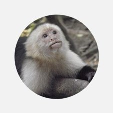 "Capuchin Monkey 3.5"" Button"