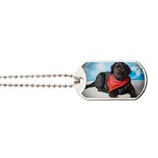 What's Up? Courious Black Lab Dog Tags