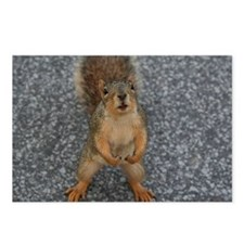 Squirrel Friend Postcards (Package of 8)