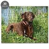 Chocolate lab Puzzles