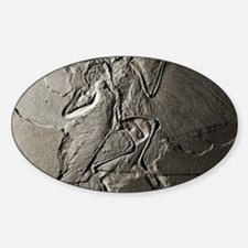 Archaeopteryx Decal
