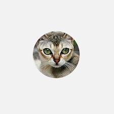Singapura Cat Mini Button