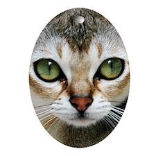 Singapura Cat Oval Ornament