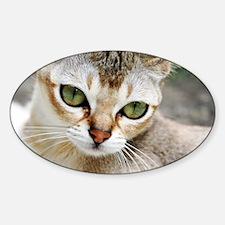 Singapura Cat Decal