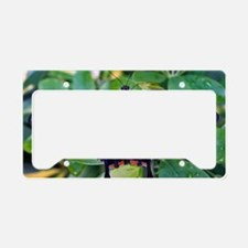 Swallowtail Butterfly License Plate Holder