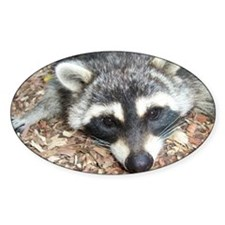 Hiway Coon Decal