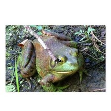 Frog - Close UP Postcards (Package of 8)
